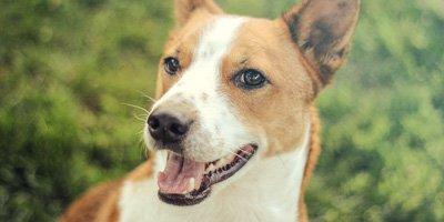 24 Honden die niet (of nauwelijks) verharen 20