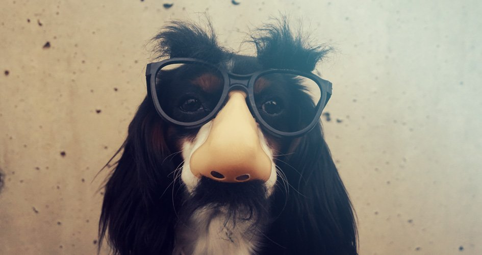 Een blinde hond – Hoe komt het en hoe ga je ermee om