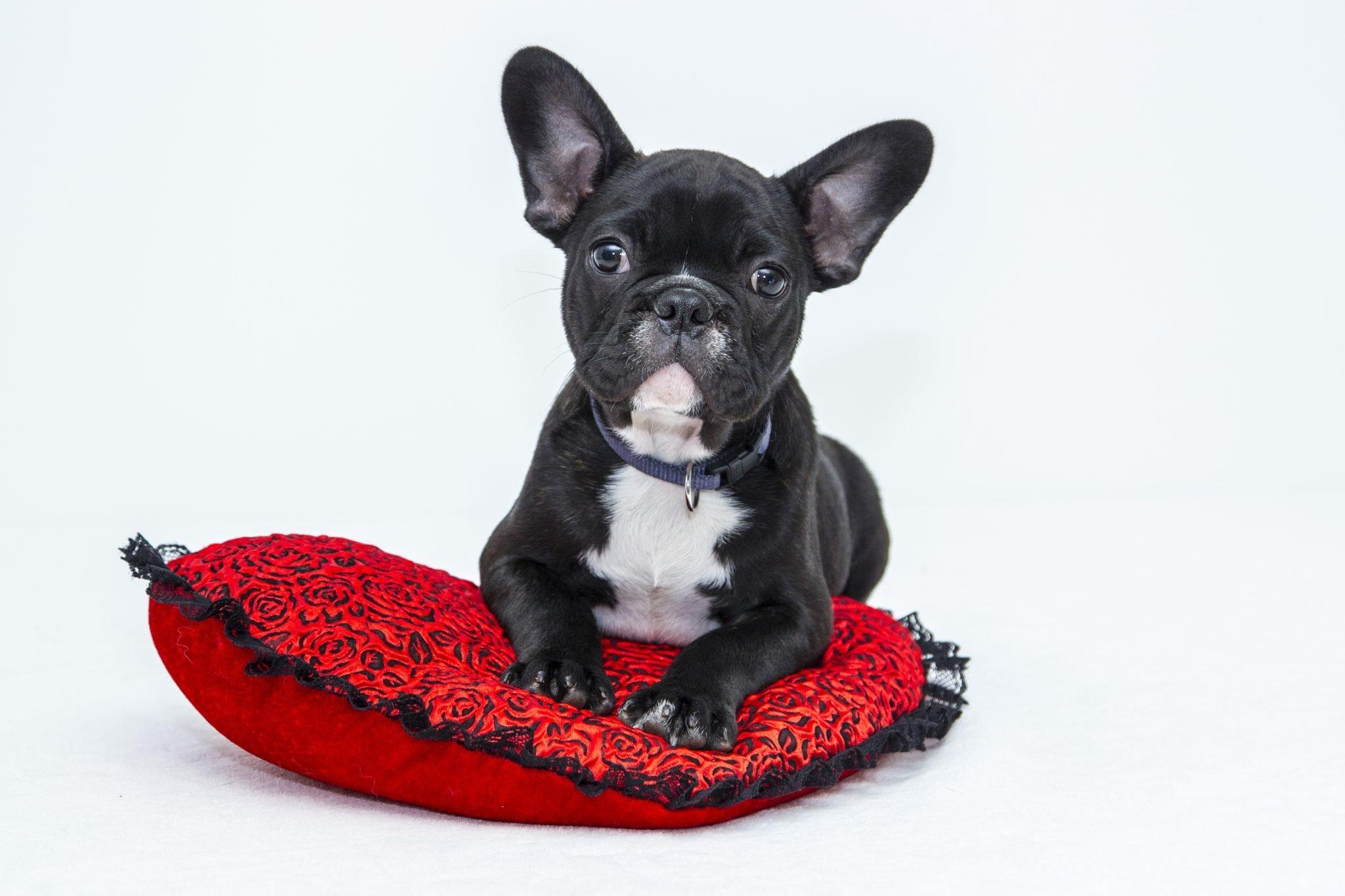 Hoe kun je een puppy zindelijk maken 2