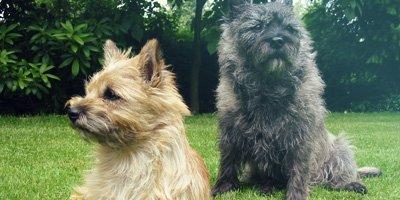 24 Honden die niet (of nauwelijks) verharen 24