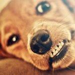 Effectieve tips om je hond bijten af te leren
