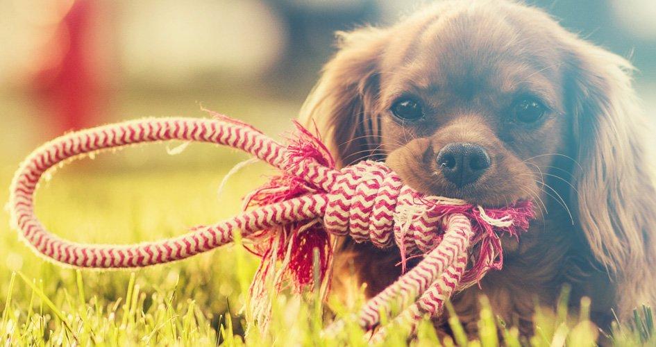 Tips om je hond trucjes aan te leren