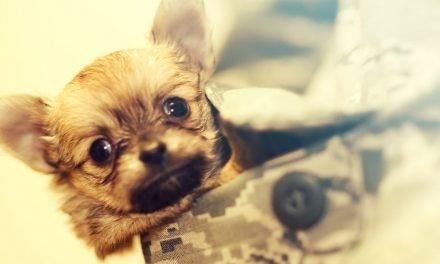 Een hond met verlatingsangst kun je helpen