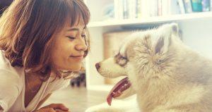 Wat zijn de kosten van mijn hondenbelasting?