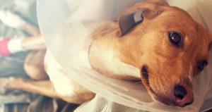 Hondenverzekering: aandachtspunten, kosten en vergelijkingen