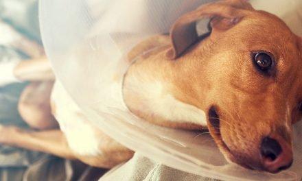 Honden verzekering: aandachtspunten en kosten