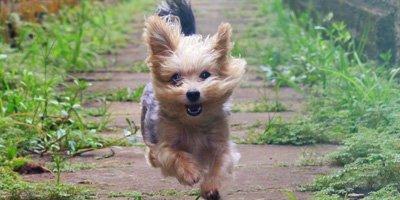 24 Honden die niet (of nauwelijks) verharen 18