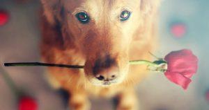 5 Honden die helemaal klaar zijn voor Valentijnsdag!