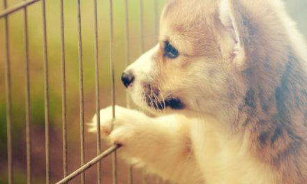 Welke maat hondenbench is goed voor je hond?