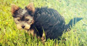 Hond heeft last van diarree