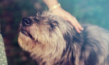Jeuk bij honden: oorzaak en oplossing voor honden met huidproblemen