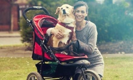 Dé hondenbuggy gids voor de perfecte buggy
