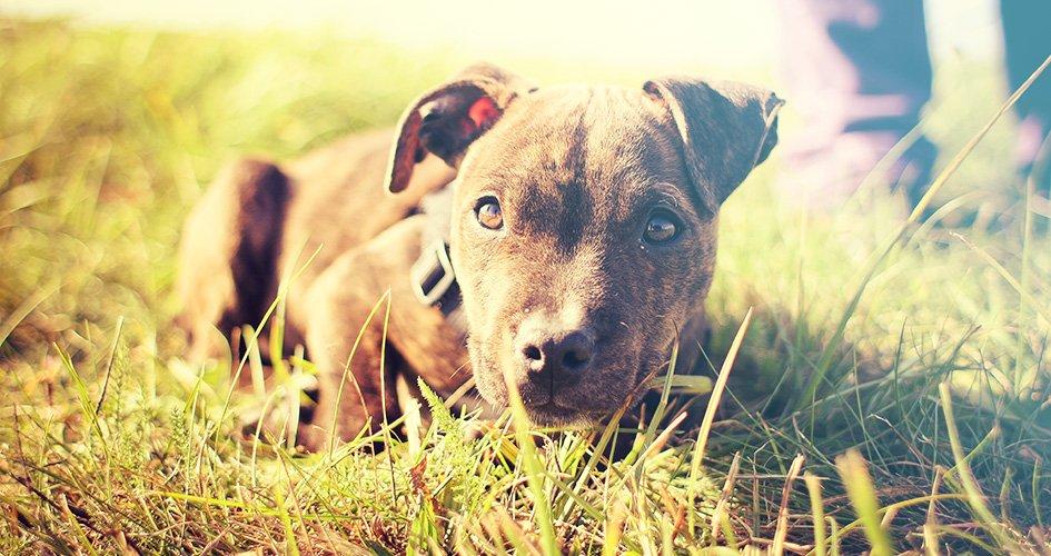 Hond last van kennelhoest? Symptomen en behandeling