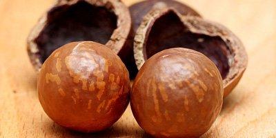mag een hond macadamia noten