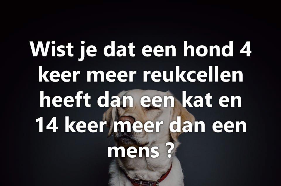 Wist je dat honden.. 3
