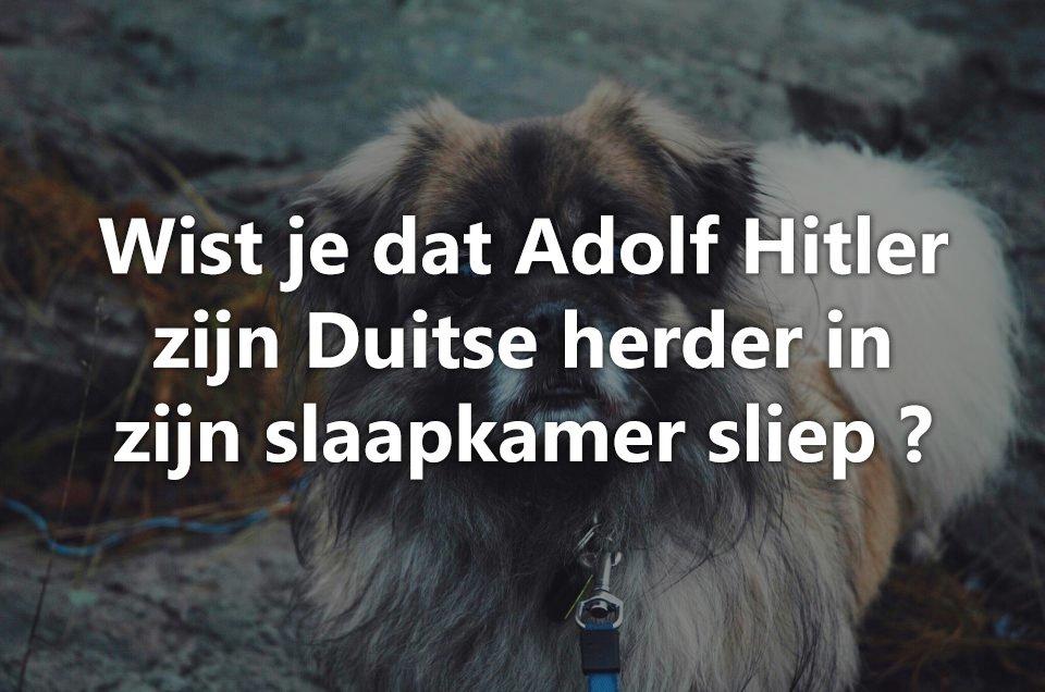 Wist je dat honden.. 4