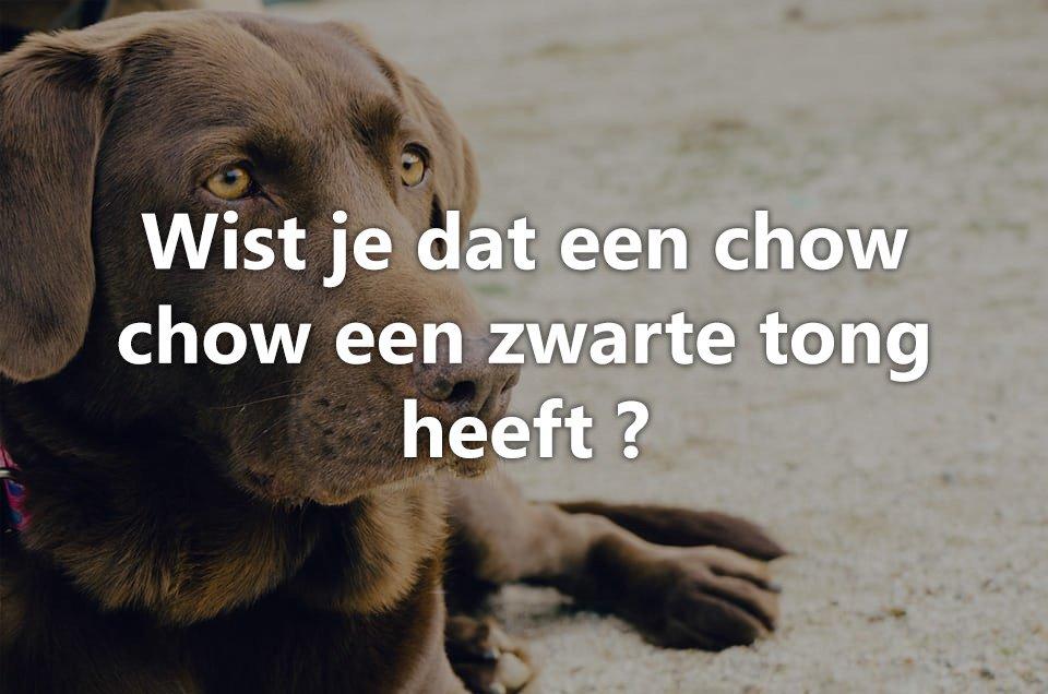 Wist je dat honden.. 12