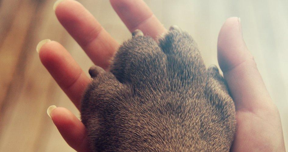 Wat kan ik doen als ik de nagels van mijn hond te kort heb afgeknipt?