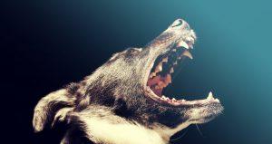 8 manieren om gemakkelijk de tanden van je hond te poetsen