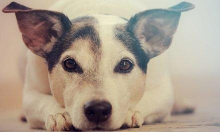10 meest gemaakte fouten bij het trainen en opvoeden van je hond