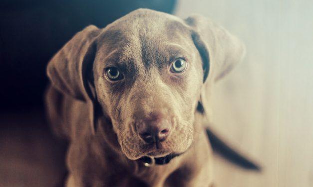 5 Tips voor de benchtraining van je puppy