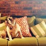 Bijt je hond in meubels? 10 Tips om je meubels te beschermen