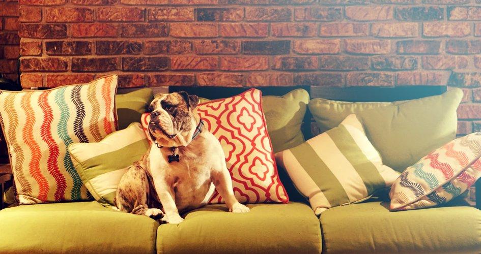 Bijt jouw hond in meubels? 10 Tips om je meubels te beschermen