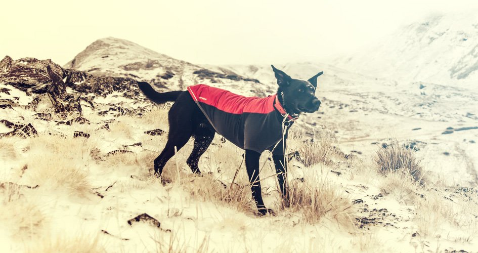 Dé hondenjas gids voor de beste hondenjas