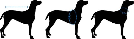 hondenjas-maat-opnemen