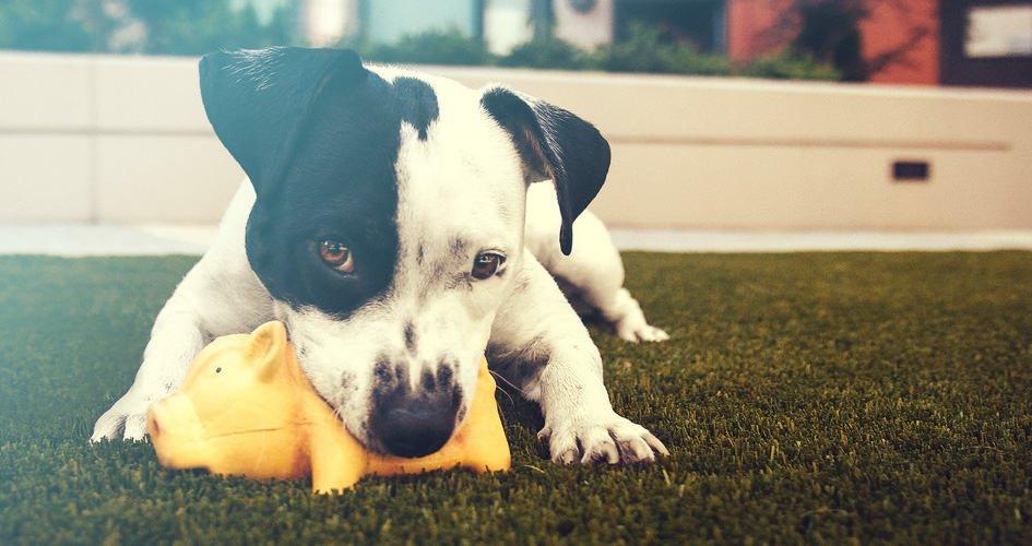 De 7 beste hondenspeelgoed om te kopen in 2019