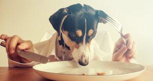 De basis van Hondenvoer: Tips voor het voeren van je hond