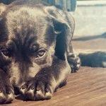 Puppy 101: Hoe zorg je voor je nieuwe hond