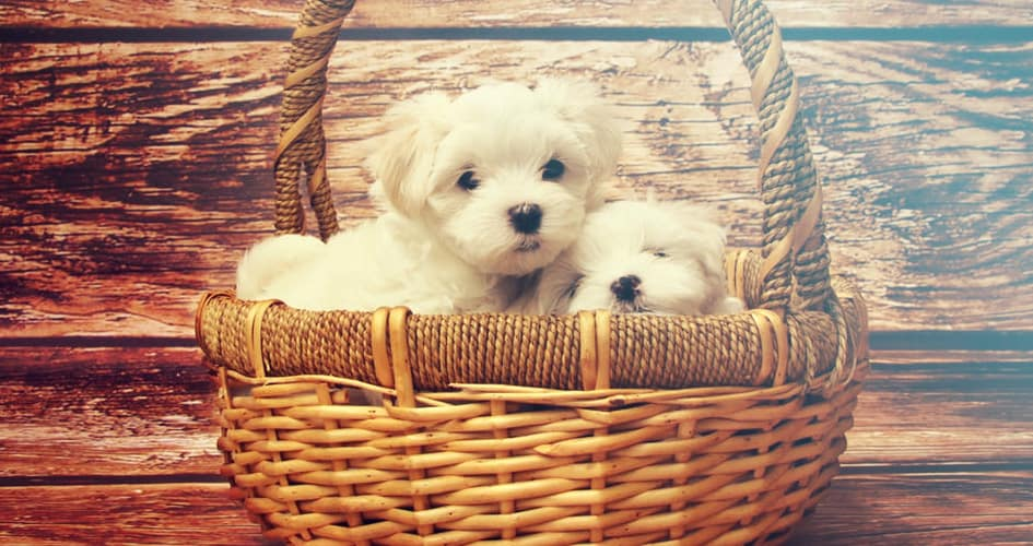 Puppy ontwikkeling: van week 10 tot 2 jaar