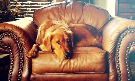 Hond het af-commando leren