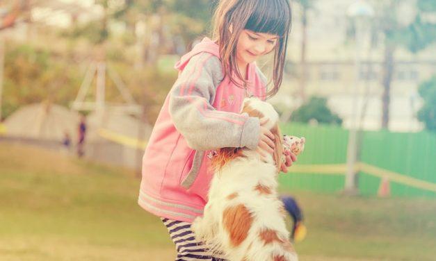 Puppy socialisatie: de eerste stap in de opvoeding en ontwikkeling van de hond