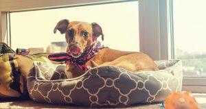 10 Soorten hondenkussens: welke past het beste bij jouw hond?