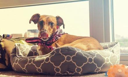10 Soorten hondenkussens: welke past het beste bij jou hond?