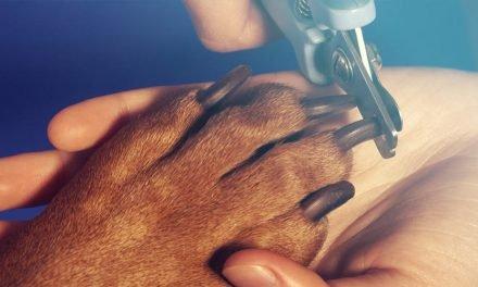 Hondennagels trimmen: hoe kan je makkelijk zelf de nagels van hond knippen