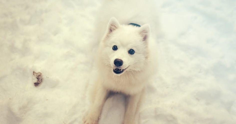 7 tips om je hond in de winter veilig en warm te houden