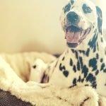Orthopedisch hondenkussen gids – Waar moet je op letten?