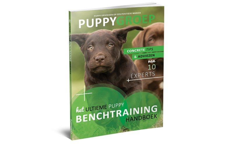 Stapsgewijze Handleiding voor het Opvoeden van je Puppy: De Nieuwe Methode! 2