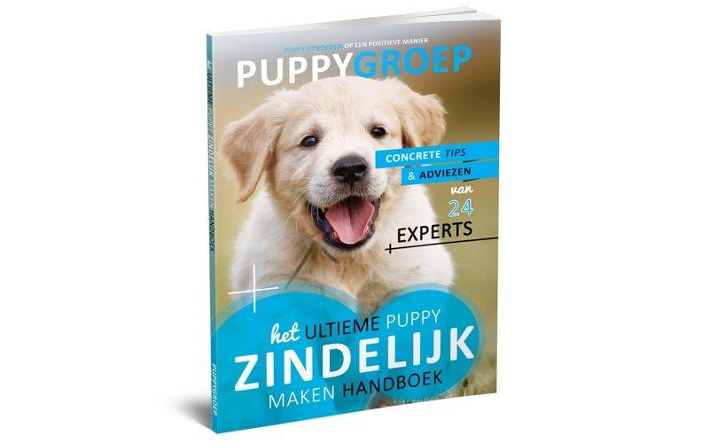Stapsgewijze Handleiding voor het Opvoeden van je Puppy: De Nieuwe Methode! 1