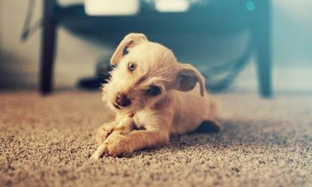 22 Populaire Kleine Honden