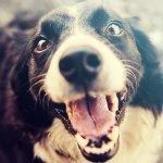 10 dingen die jij moet doen voor jouw hond