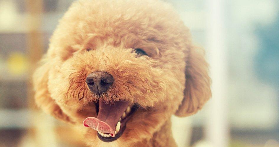 De 10 meest voorkomende problemen bij honden