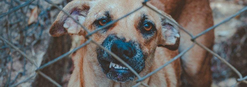 De 10 meest voorkomende problemen bij honden 11