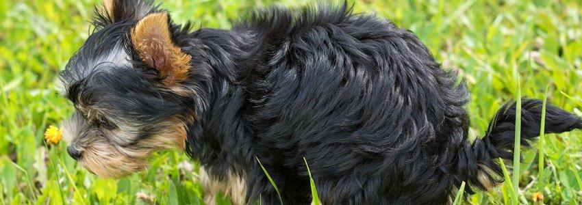 De 10 meest voorkomende problemen bij honden 5