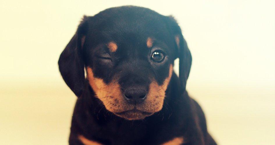 De eerste 24 uur met je puppy