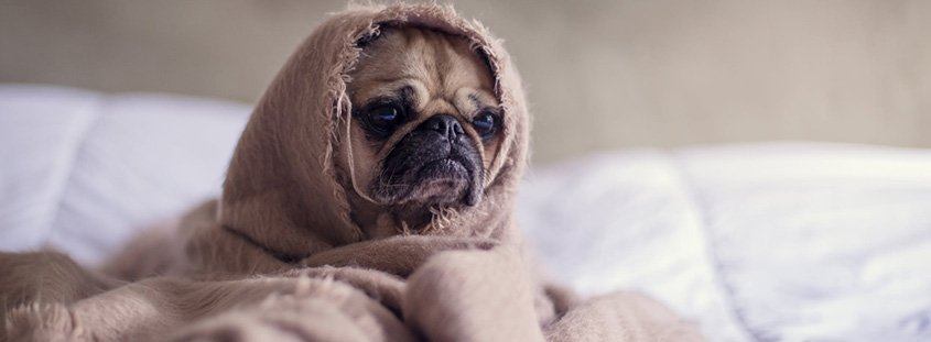 Hond ontwormen, welke middelen moet je gebruiken en wanneer? 1
