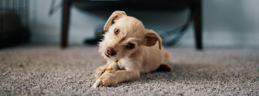De eerste 24 uur met je puppy 2